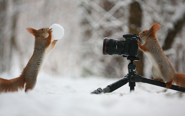squirrel-vadim-trunov-russia03