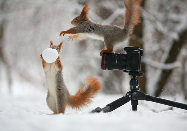 squirrel-vadim-trunov-russia04