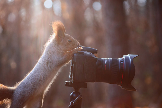 squirrel-vadim-trunov-russia06