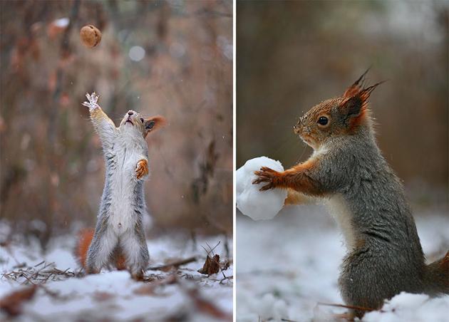 squirrel-vadim-trunov-russia08