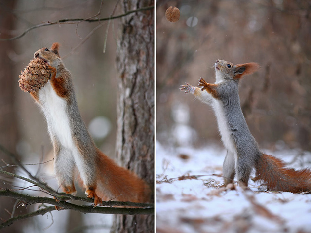squirrel-vadim-trunov-russia09