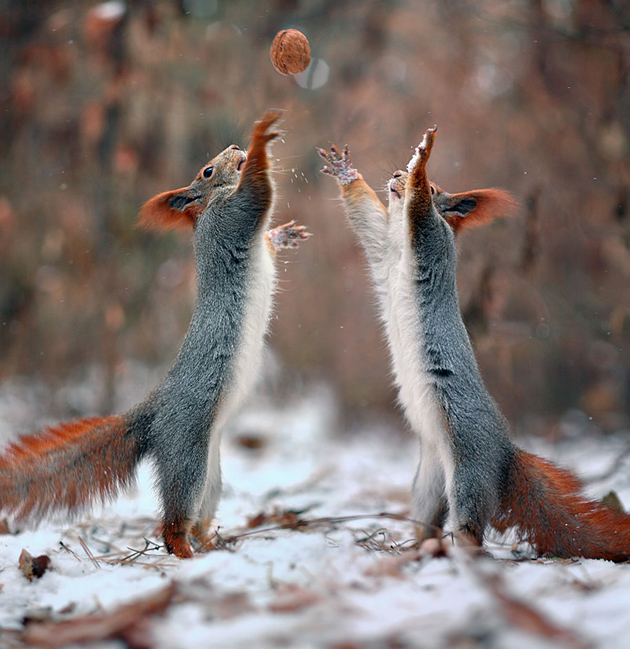 squirrel-vadim-trunov-russia10