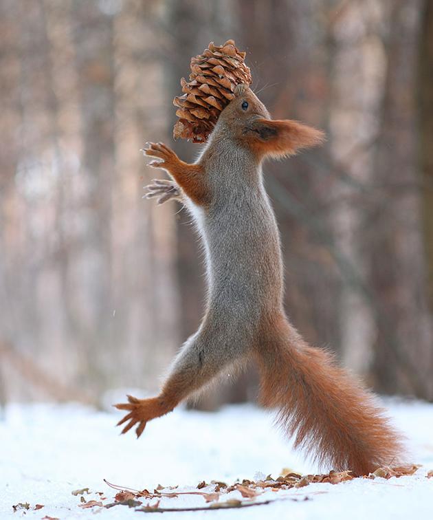 squirrel-vadim-trunov-russia12