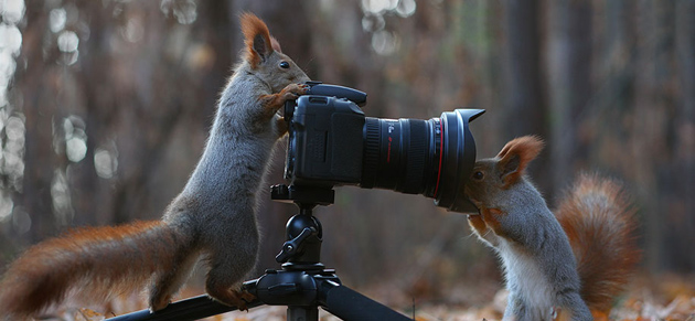 squirrel-vadim-trunov-russia13
