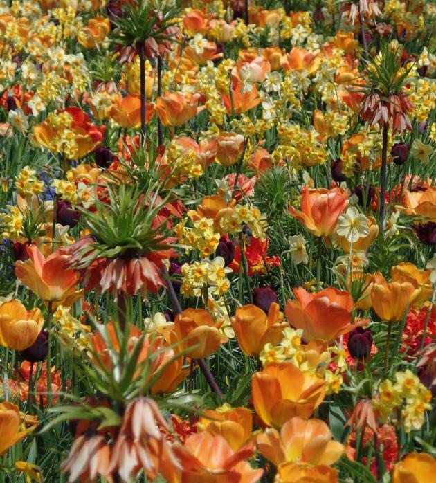 Ragyogó sárgák a kertben/Fotó: Timi