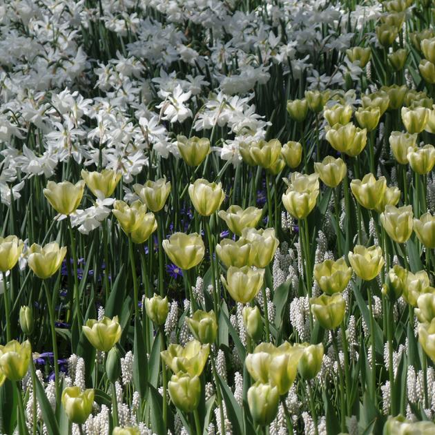 Keukenhof minden évben lehetőséget ad a holland virágkertészeknek, hogy bemutassák kínálatukat./Fotó: Timi
