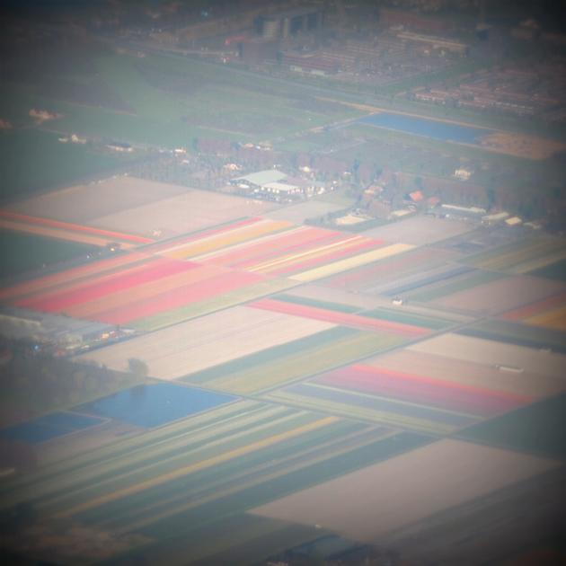 Hollandia a világ legnagyobb tulipánhagyma termelője - 10.000 hektáron évi 4,2 milliárd tulipánhagymával - és tulipán virágzás idején a holland táj káprázatos színekbe öltözik. Pedig a tulipán nem is őshonos ezen a vidéken, a 17. században ültették el az első hagymákat./Fotó Timi, Keukenhof