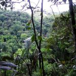 139 új fajt fedeztek fel a Mekong vízgyűjtőn
