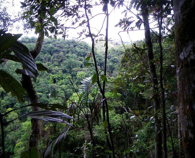 2014-ben csak a Mekong mentén 139 új fajt fedeztek fel, ám jónéhány ezek közül már most is veszélyeztetett fajnak számít a WWF legutóbbi jelentése szerint. (Fotó: WWF)