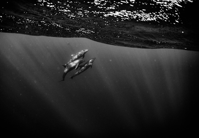 Az óceán közepén a víz alatt. Fotó: Anuar Patjane