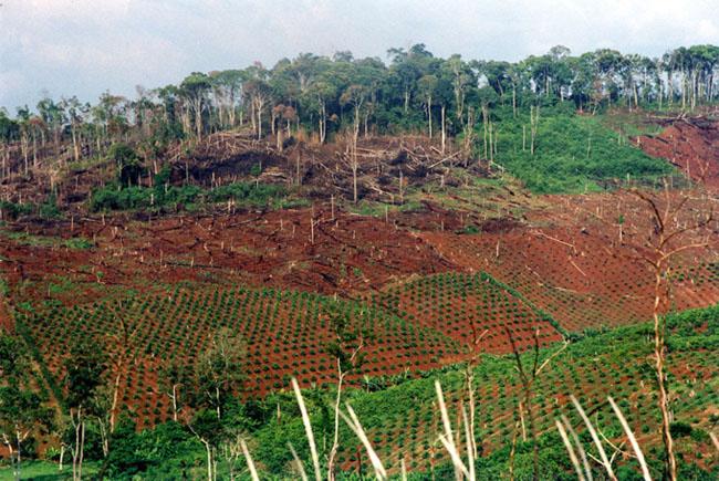 Erdőírtás Vietnamban, hogy új kávéültetvényeket tudjanak telepíteni./Fotó: WWF - Elizabeth Kemf