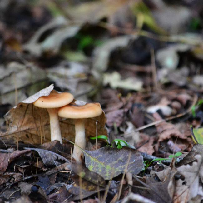 Már-már giccses őszi romantika (Fotó: Myreille)