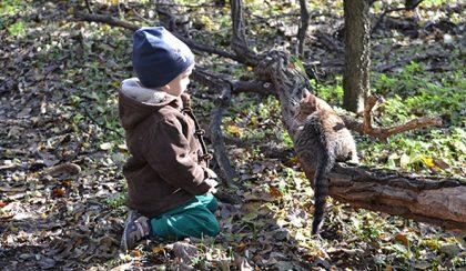 Micu kirándul: házi macska a rengetegben