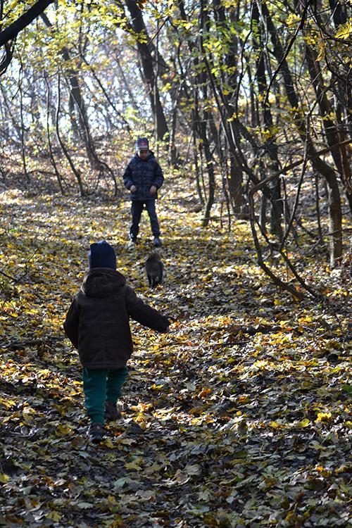 Séta az erdőben... (Fotó: Myreille)