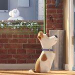 Megérkezett A KIS KEDVENCEK TITKOS ÉLETE című animációs film legújabb előzetese