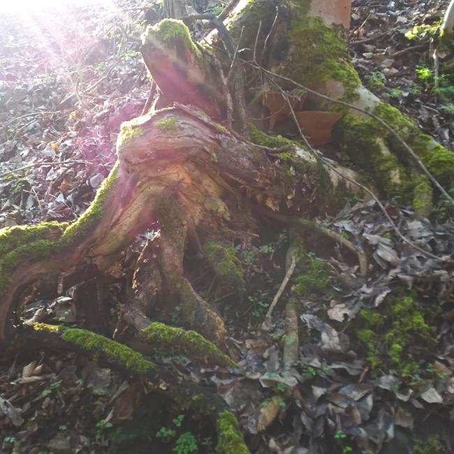 """Amikor vidékre költöztünk vonzott minket a családi ház, a kert és a jó levegő. A szomszéd erdő tavaly ősszel tárta fel titkait és nem tudunk ráunni. 3 perc séta és """"meseország"""". (Fotó: Myreille)"""