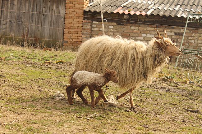 Anya és lánya (Fotó: Piszke)