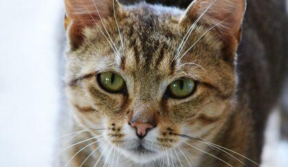 Micu és a nyár: A tékozló macska hazatér