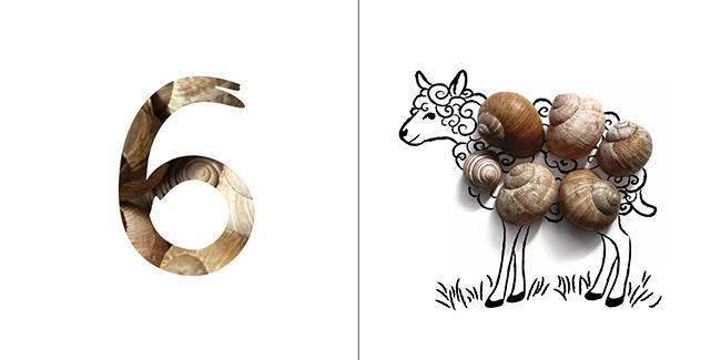 szamolos05