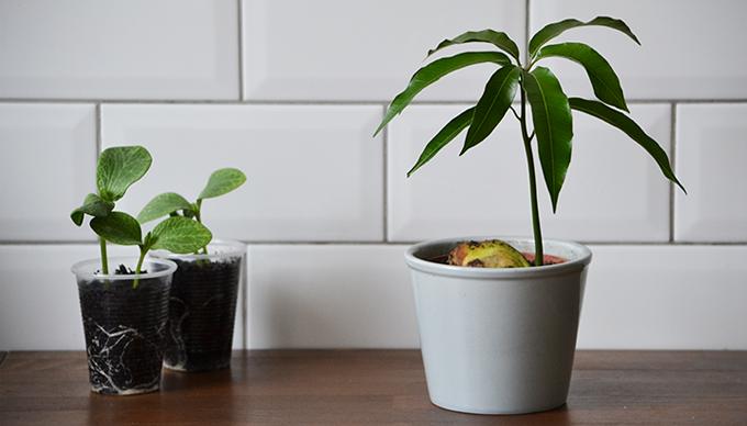 mango02a