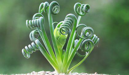 7 furcsa, de gyönyörű szobanövény, amit még nem ismertél