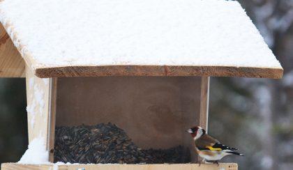 Leesett az első hó, nagy a forgalom a madáretetőnél