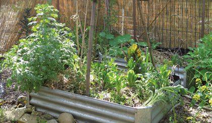 Így gondozd a kertedet, avagy kerti tippek gyerekeknek