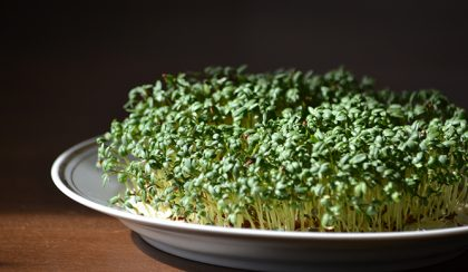 Tavasz a tányéron: nevelj zsázsát pár nap alatt