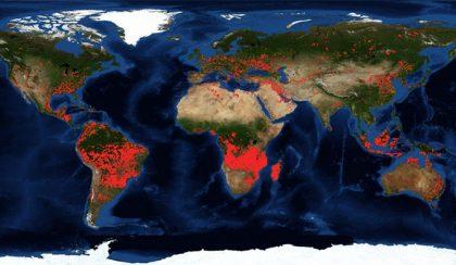 5 dolog, amit az égő erdőről (fáról) tudni kellene