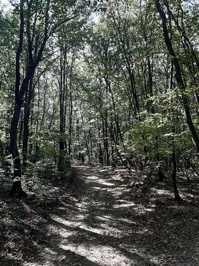 Fények és árnyékok az erdőben/Fotó: Myreille, 2019