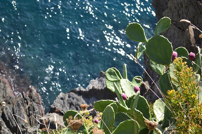 Cinque Terre: Manarola