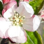 Kertünk az Instagramon: @a_year_in_our_garden