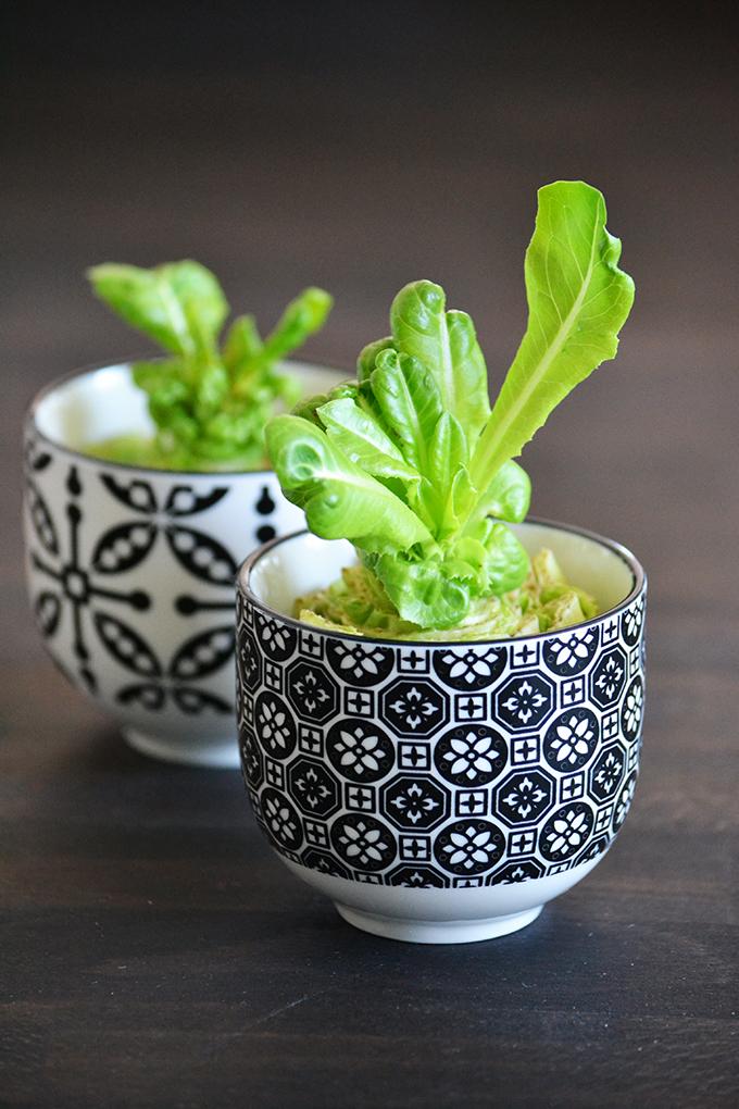 Április 23. - A salátaszív-kertész bánatos naplója/Fotó: Myreille
