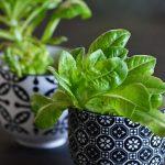 5 minute crafts vs. a salátaszív-kertész bánatos naplója