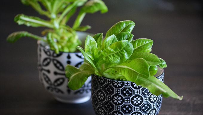 Május 11. - A salátaszív-kertész bánatos naplója/Fotó: Myreille