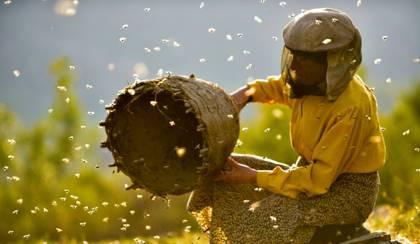 Honeyland (Mézföld)