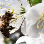 6 tanulságos videó, a méhek csodálatos világáról